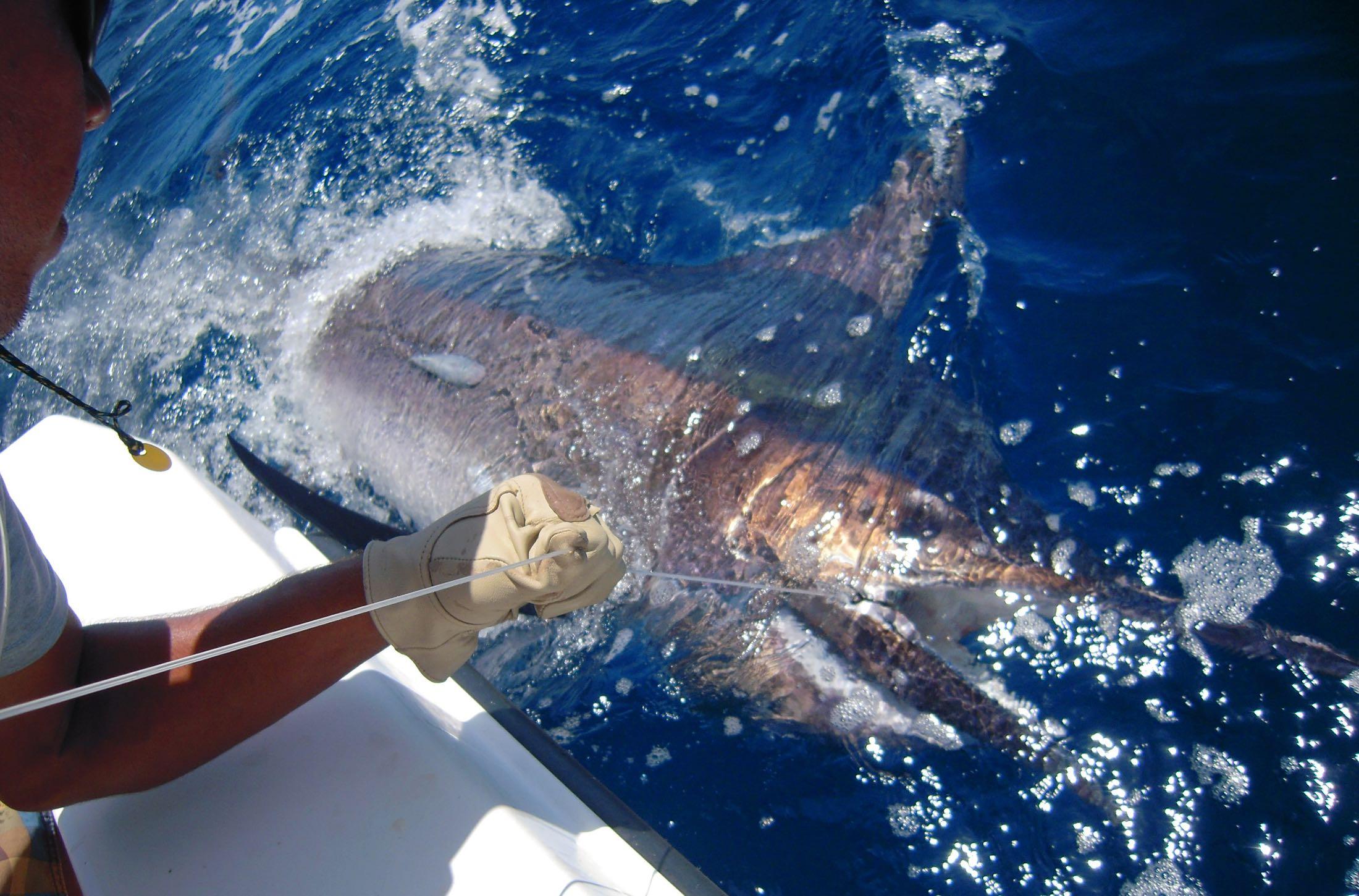The Big Marlin